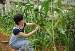 第1回:食と農の未来へ。体験型貸農園「オークファーム」(2012/06取材)