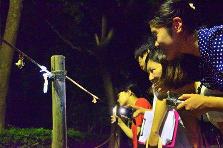 柏の葉公園で行う「セミの羽化を観察しよう」の一幕